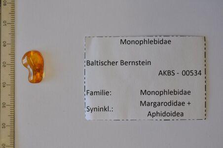 translation missing: de.preview ACHTUNG! Bernstein m. Schildläusen, Blattlaus