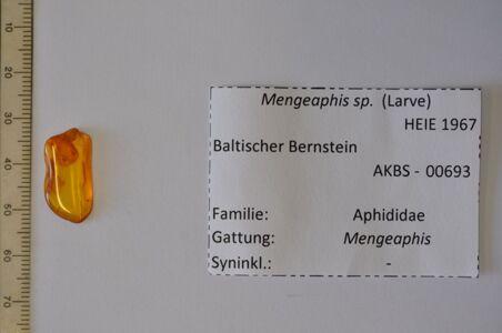 preview Bernstein m. 2 Blattlauslarven
