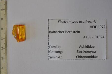 preview Bernstein m. 2 Blattläusen, Zuckmücke