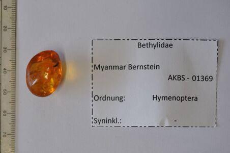 translation missing: de.preview Bernstein m. 2 Goldwespen (?)