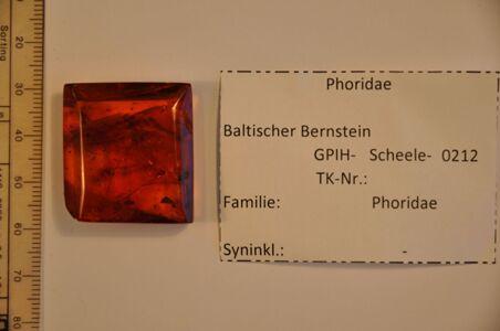 translation missing: de.preview Bernstein m. 2 Buckelfliegen