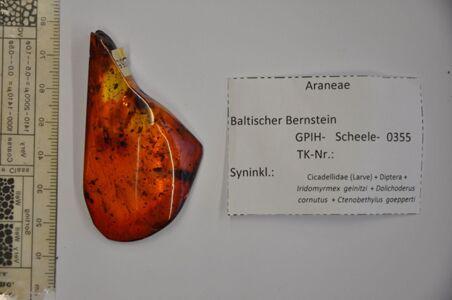 translation missing: de.preview Bernstein m. 2 Jungspinnen, Zikaden-Larve, Mücken, 3 Ameisen