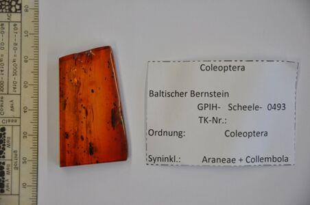 translation missing: de.preview Bernstein m. 2 Käfer, Spinne, Springschwanz
