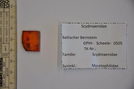 translation missing: de.preview Bernstein m. 2 Ameisenkäfern, Pilzmücken, Pflanzenrest