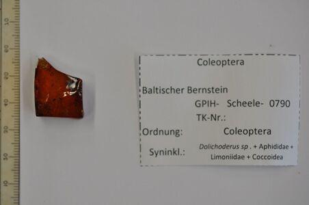 translation missing: de.preview Bernstein m. 2 Käfern, Ameise, Blattlaus-Larve, Stelzmücke, Schildlaus (weibl.)