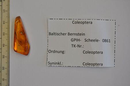 translation missing: de.preview Bernstein m. 2 Käfern
