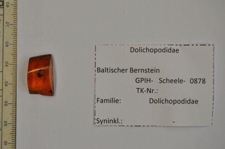 translation missing: de.preview Bernstein m. 2 Langbeinfliegen