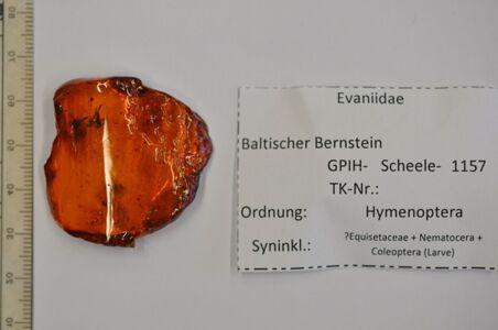 translation missing: de.preview Bernstein m. 2 Hungerwespen, ?Schachtelhalm, Mücke, Käfer-Larve