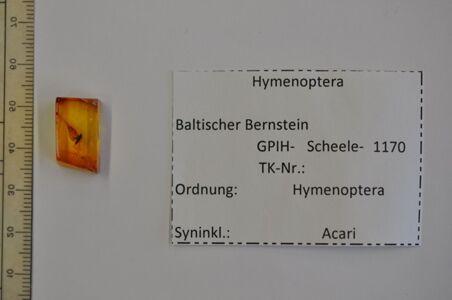 translation missing: de.preview Bernstein m. 2 Kleinwespen mit Milbe