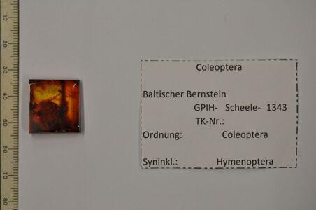 translation missing: de.preview Bernstein m. 2 Käfer, parasit. Wespe