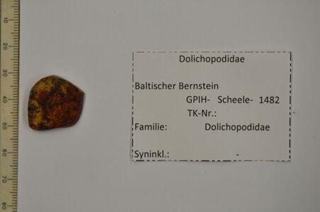 translation missing: de.preview Bernstein m. 2 Langbeinfliegen in Brack