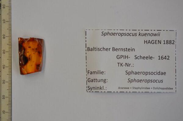 Vorschaubild Bernstein m. Laus, Kurzflügelkäfer, 2 Jungspinnen, Langbeinfliege