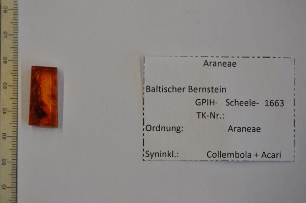 Vorschaubild Bernstein m. großer Spinne, Springschwanz, Milben