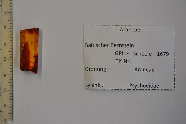 Vorschaubild Bernstein m. Jungspinne, Schmetterlingsmücke