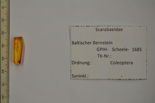 Vorschaubild Bernstein m. Blatthornkäfer Fühler