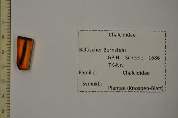 Vorschaubild Bernstein m. parasitischer Wespe, Knospenhüllblättchen