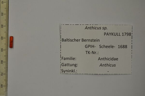 translation missing: de.preview Bernstein m. Käfer
