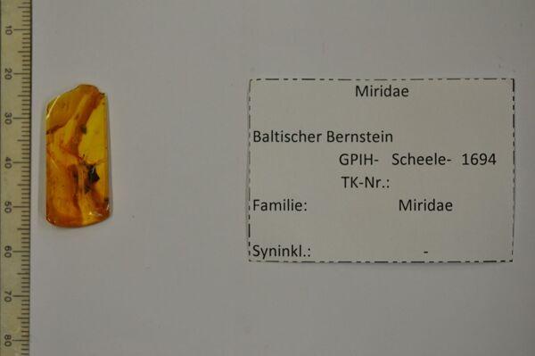 translation missing: de.preview Bernstein m. Weichwanze
