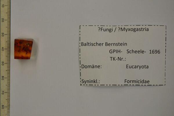 translation missing: de.preview Bernstein m. Schimmelpilz, Ameise
