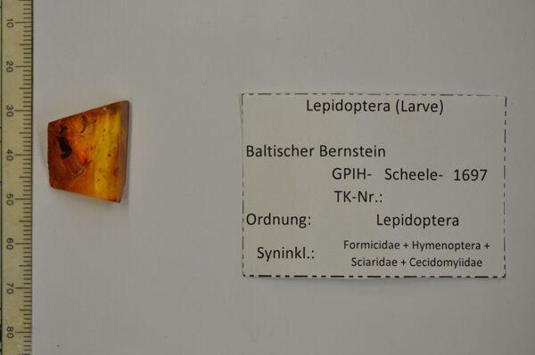 translation missing: de.preview Bernstein m. schöner Raupe, Ameise, Kleinwespe, Trauermücke, Gallmücke