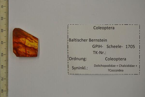 translation missing: de.preview Bernstein m. Käfer, Langbeinfliege, parasit. Wespe, Minischildlaus