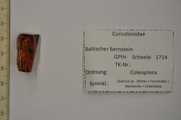 translation missing: de.preview Bernstein m. Rüsselkäfer, Eichenblüte, Ameise, 2 Würmer, 2 Springschwänze
