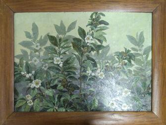 Vorschaubild Teepflanze