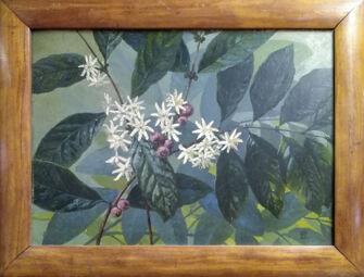 Vorschaubild Kaffeepflanze