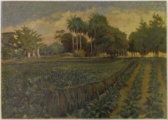 Vorschaubild Tabakanpflanzung